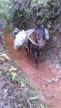 Fortalecimiento  de acueductos rurales.